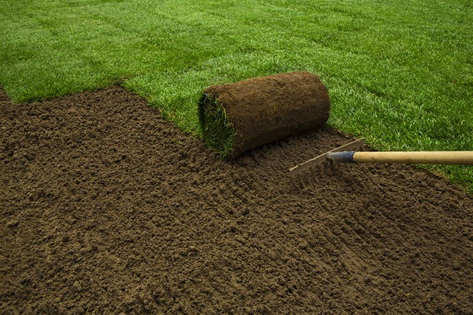 when not to roll your lawn
