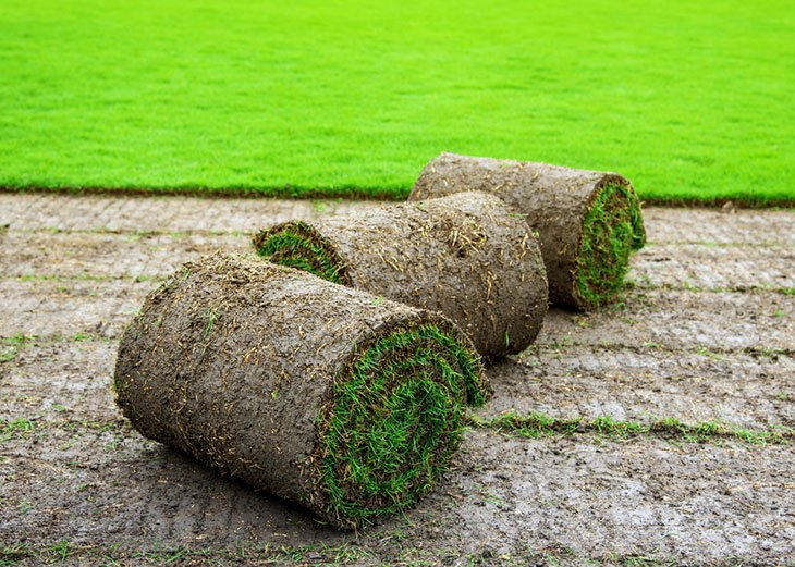 when to roll and aerate your lawn