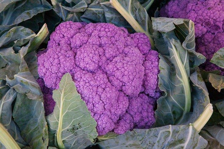 why is my cauliflower going purple